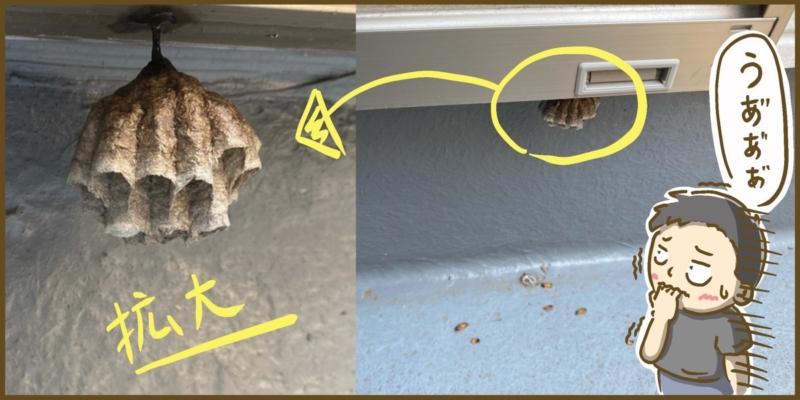 窓の下にできたアシナガバチの巣