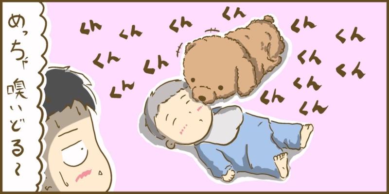 生まれた子どもの匂いをひたすら嗅ぐペットの犬